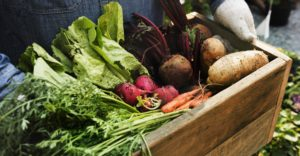 Brattleboro Farmers Market