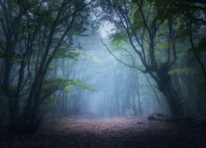 Foggy forest path to the castle