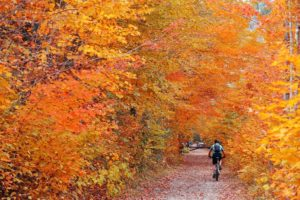 Biking in colorful woods with Autumn foliage in Vermont