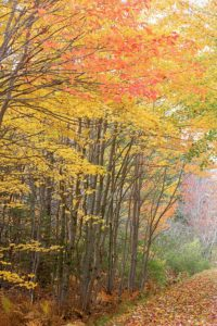 Great fall hiking trail in colorful forest